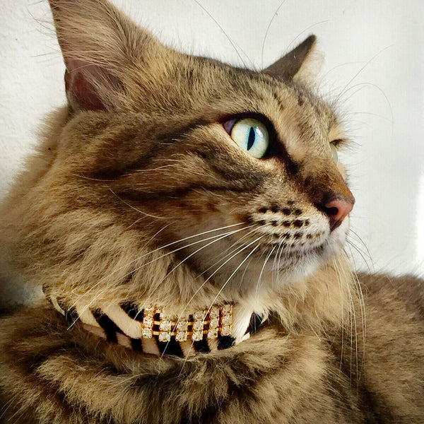 Masculine Zanzibar Cat Collar - BARCELONADOGS