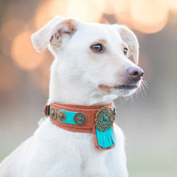 Apache Dog Collar - BARCELONADOGS