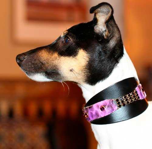 Black Swan Sighthound Collar - BARCELONADOGS