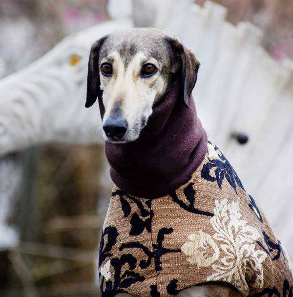 Haute Couture Brocade Dog Coat - BARCELONADOGS