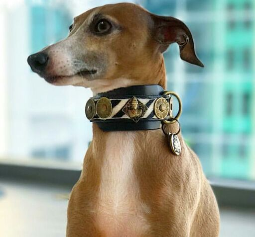 Buddha Salvaje Italian Greyhound Collar - BARCELONADOGS