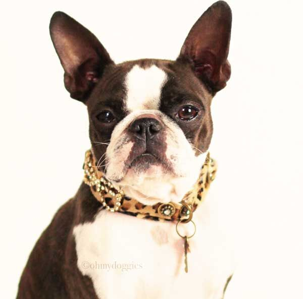 Karen Blixen Dog Collar - BARCELONADOGS