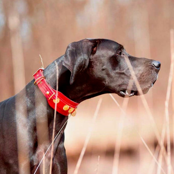 Red Dog Collar - BARCELONADOGS