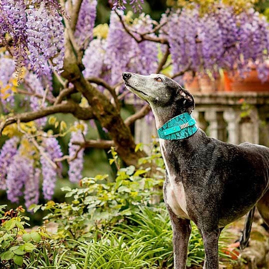 Elle Sighthound Collar