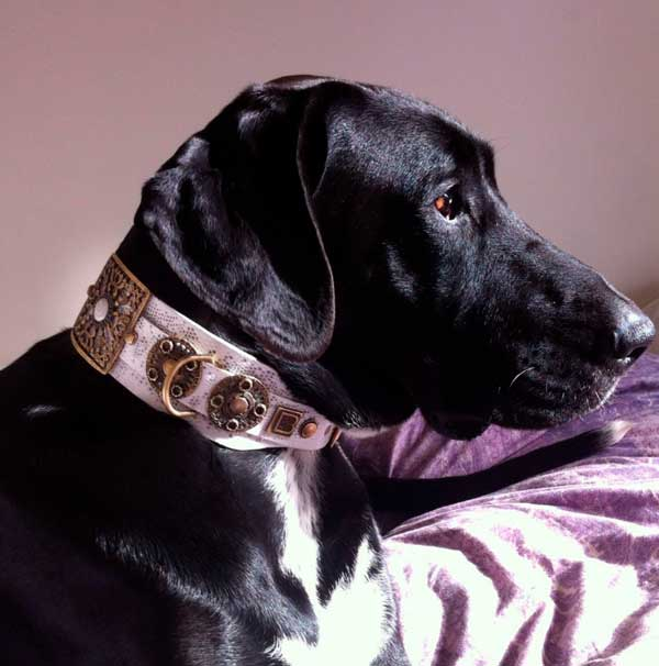 Empire Snake XXL Dog Collar - BARCELONADOGS