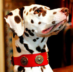 Eternité Dog Collar - BARCELONADOGS