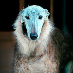 Faux Fur Sighthound Coat