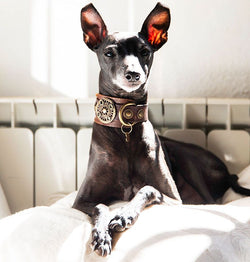 Basic Dog Collar - BARCELONADOGS