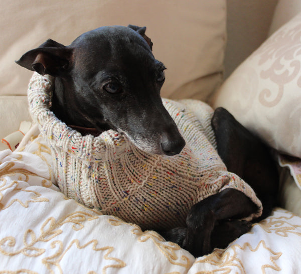 Beige sweater for small Sighthounds