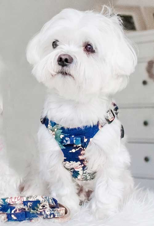 Tropical Navy Dog Harness