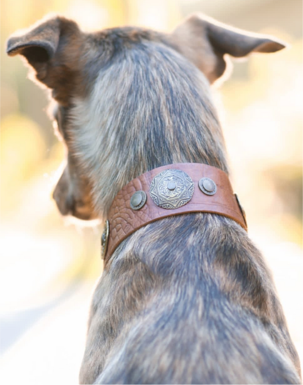 Viking Dog Collar