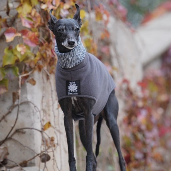 NEW Italian Greyhound Fleece Coat