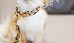 Sparkling Dog Collar