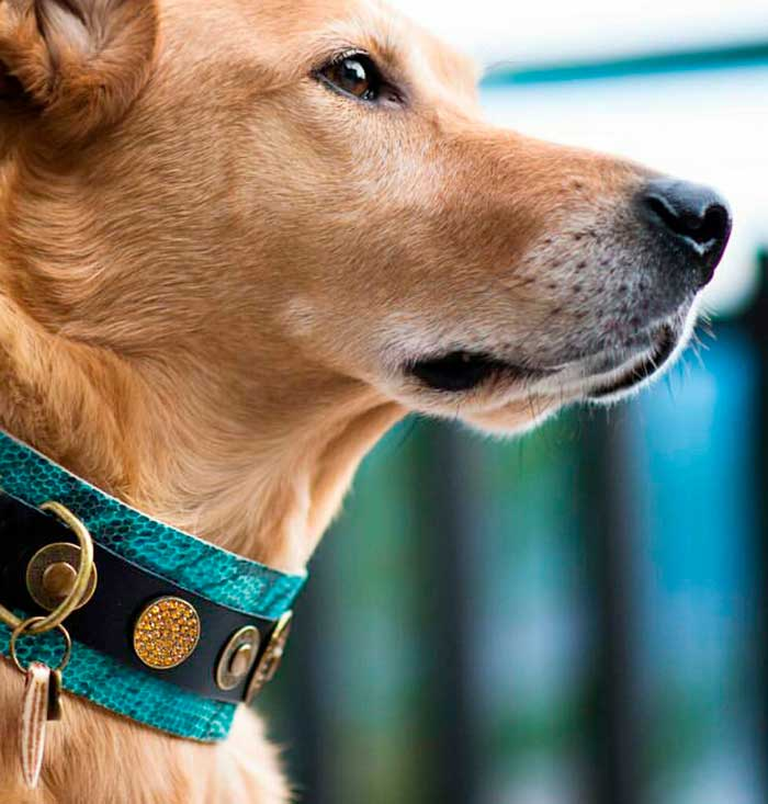 Ocean Blue Dog Collar - BARCELONADOGS