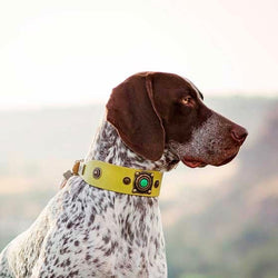 Only Boys Dog Collar - BARCELONADOGS