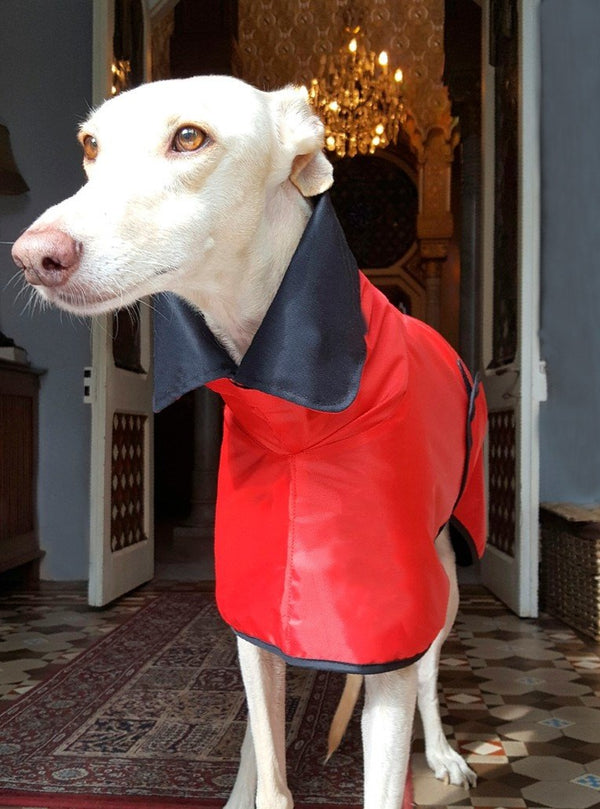 Little Red Riding Hood Coat Sighthounds