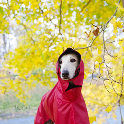 Little Red Riding Hood Coat Sighthounds - BARCELONADOGS