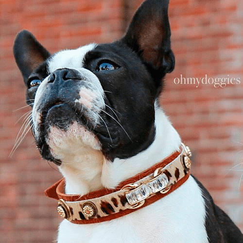 Rossellini Dog Collar - BARCELONADOGS