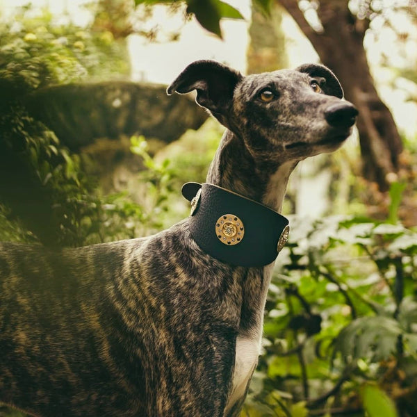 Simply Casablanca Sighthound Collar