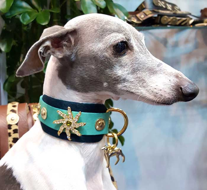 Starfish Dog Collar - BARCELONADOGS