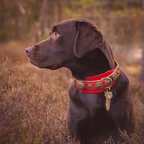 Viking de Luxe Dog Collar