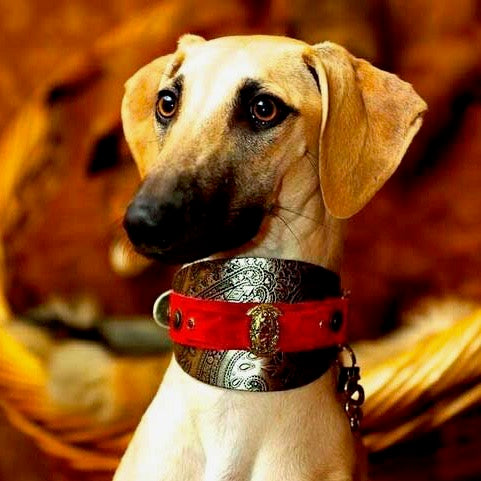 Vintage Dog Collar - BARCELONADOGS