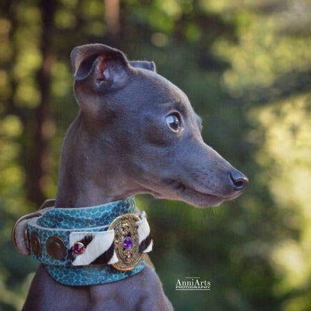 Vintage Italian Greyhound Collar - BARCELONADOGS