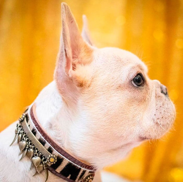 Kwatile Dog Collar - BARCELONADOGS