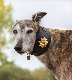 Wild Emperor Sighthound Collar - BARCELONADOGS