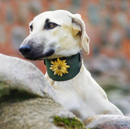 Wild Emperor Sighthound Collar