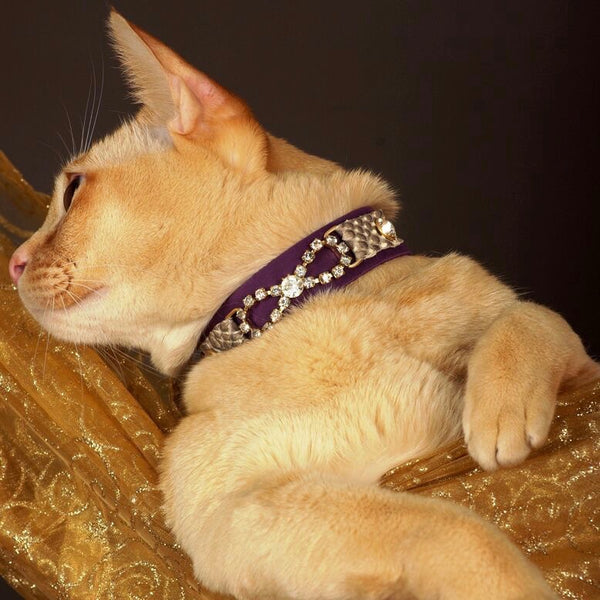 Tribal Rosette Cat Collar - BARCELONADOGS