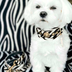 Only Zebra Dog Collar - BARCELONADOGS