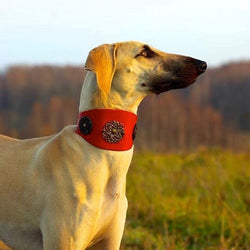 Eternité Sighthound Collar - BARCELONADOGS