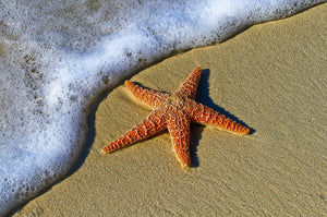 The starfish story is our inspiration to save our marine life