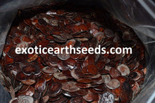 Load image into Gallery viewer, FREE SHIPPING YOPO SEEDS ANADENANTHERA PEREGRINA PERUVIAN cohoba untreated clean seeds