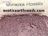 MIMOSA HOSTILIS POWDERED root Bark clothing dye powder MHRB JUREMA Tenuiflora BRAZILIAN BARK