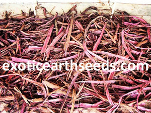 FREE SHIPPING 5+ kilos Mimosa Hostilis Root Bark SHREDDED (chipped / shredded)  MHRB JUREMA Tenuiflora JUREMA BRAZILIAN KG KILO