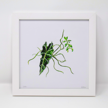 Load image into Gallery viewer, Limited Edition Houseplant Series: Print #6