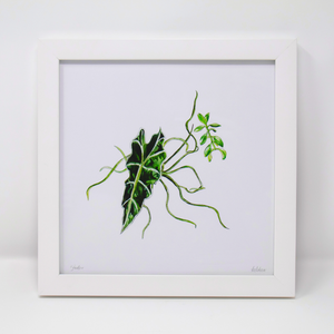 Limited Edition Houseplant Series: Print #6