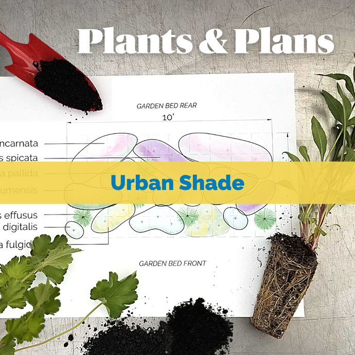 Native Plants & Plans: Urban Shade