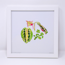 Load image into Gallery viewer, Limited Edition Houseplant Series: Print #5