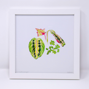 Limited Edition Houseplant Series: Print #5