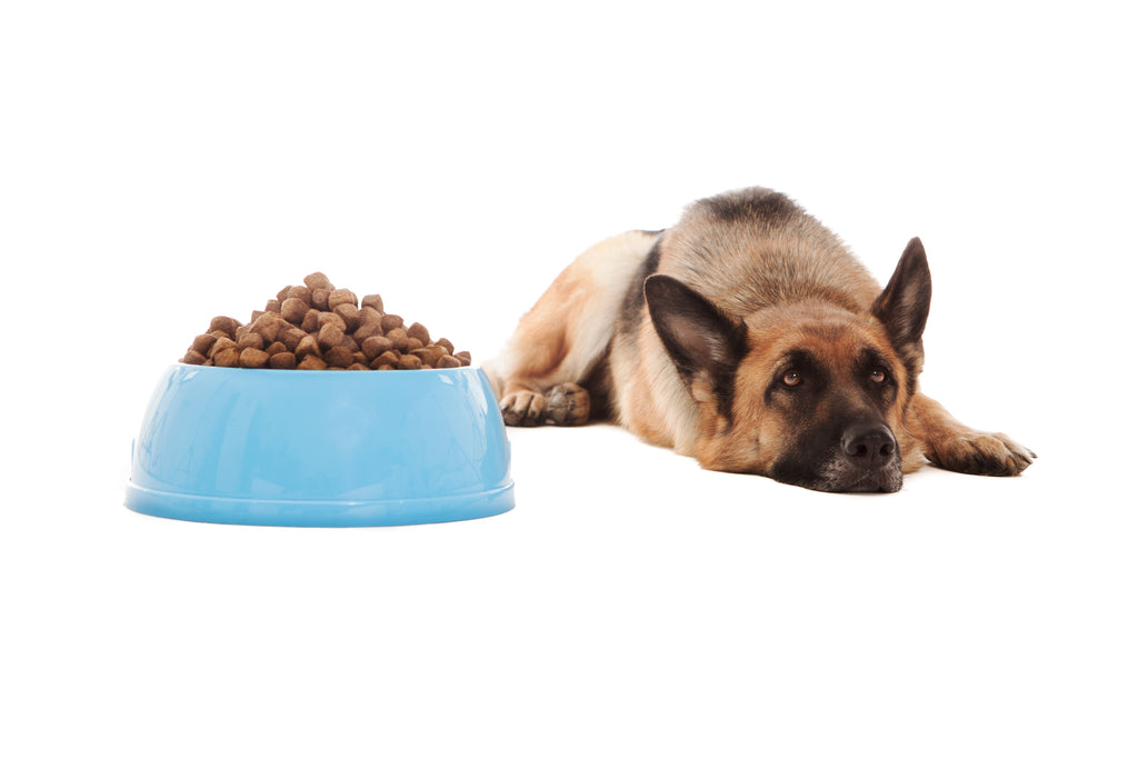 German Shepherd Not Eating