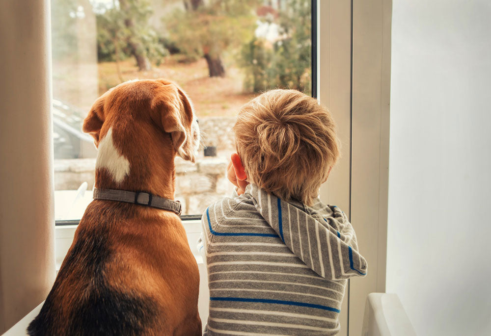 Little boy and dog looking out window