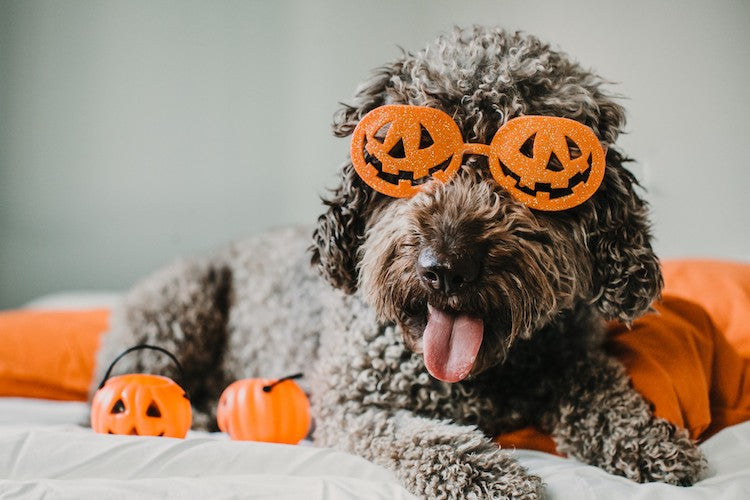 dog-with-pumpkin-glasses-halloween