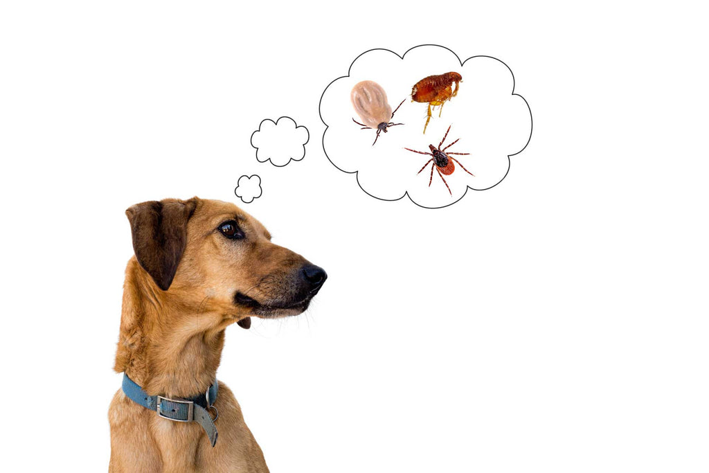 How to Prevent Fleas and Ticks on Your Dog Naturally