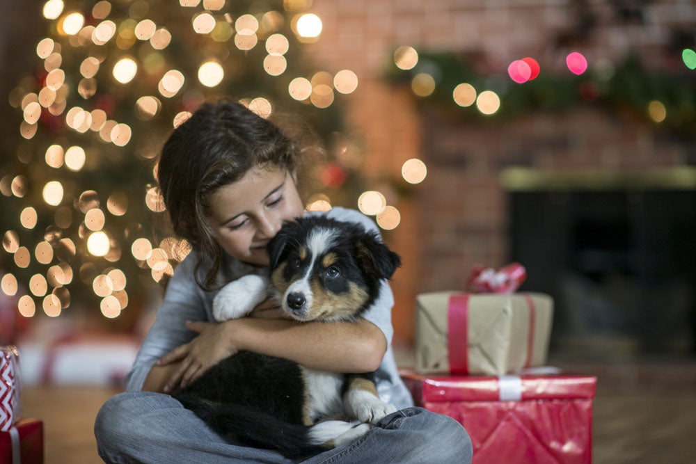 Little girl holding puppy in front of Christmas tree with presents