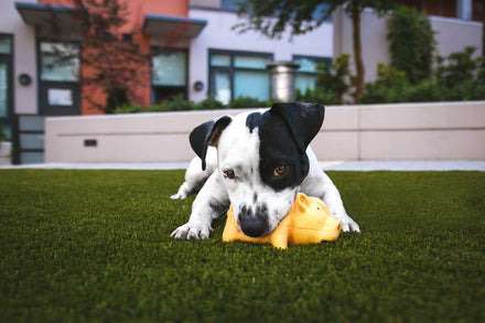 Is Your Dog an Aggressive Chewer or a Dainty Nibbler?