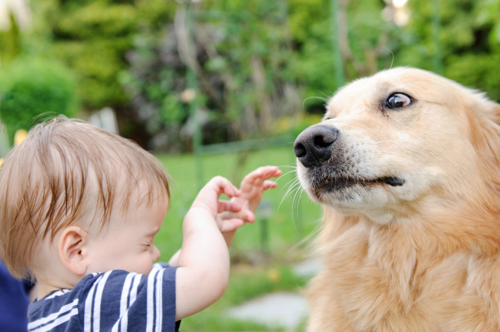 3 Tips That Will Teach Kids to Be Safe Around Dogs