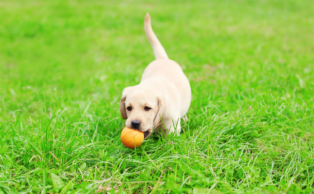 5 Training Tips Every New Puppy Parent Should Know
